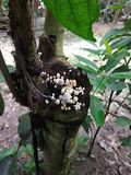 Imagem do cogumelo Uma árvore com cogumelo fotografia de stock