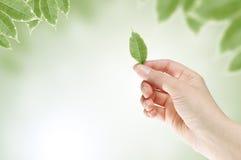 Imagem do conceito da ecologia Imagem de Stock