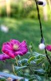 Imagem do Fractal de uma flor da clematite foto de stock royalty free