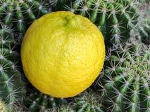 A imagem do fundo do limão e do cacto Fotos de Stock Royalty Free