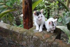 Imagem do gato fotografia de stock
