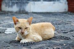 A imagem do gato Foto de Stock
