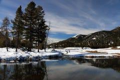 Imagem do inverno no parque nacional de Yellowstone Imagens de Stock