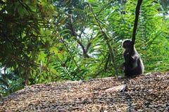 Imagem do macaco Imagens de Stock