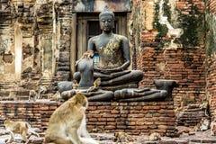 Imagem do macaco e da Buda Lopburi Tailândia Foto de Stock Royalty Free