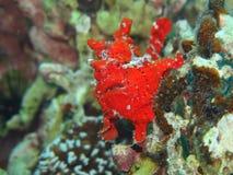 Imagem do mergulho de Filipinas fotografia de stock royalty free