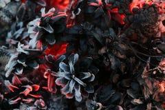 Imagem do Natal e do ano novo postcard Forest Fir Cones no fogo Imagens de Stock Royalty Free