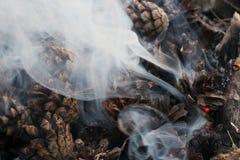 Imagem do Natal e do ano novo postcard Forest Fir Cones no fogo Imagens de Stock