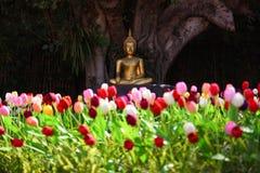 Imagem do ouro da Buda no jardim da tulipa fotografia de stock royalty free