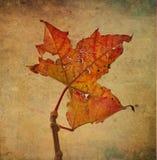 Imagem do outono ilustração do vetor