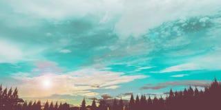 imagem do pinheiro e do céu no fundo Foto de Stock