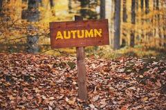 Imagem do sinal de estrada do empt na floresta Fotografia de Stock Royalty Free