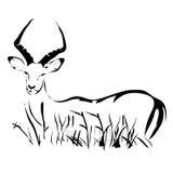 Imagem do vetor da impala do antílope do esboço Fotos de Stock Royalty Free