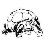 Imagem do vetor da tartaruga do esboço Fotos de Stock Royalty Free