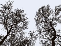 Imagem do vetor das silhuetas das árvores de folhas mortas no inverno ilustração royalty free