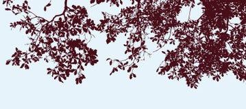 Imagem do vetor das silhuetas de ramos do carvalho no outono ilustração do vetor