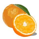 Imagem do vetor de duas laranjas ilustração royalty free