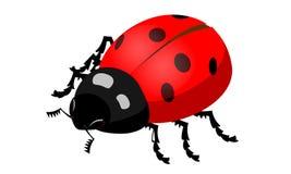 Imagem do vetor de um inseto do joaninha Fotografia de Stock Royalty Free