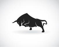 Imagem do vetor de um touro Foto de Stock