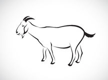 Imagem do vetor de uma cabra Foto de Stock