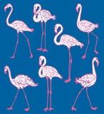 Imagem do vetor dos flamingos cor-de-rosa dos desenhos animados foto de stock