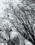 Imagem do vetor dos pombos nos ramos de árvore ilustração royalty free