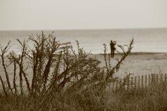Imagem dos arbustos com oceano borrado em um fundo imagem de stock