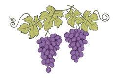 Imagem dos grupos das uvas Fotografia de Stock Royalty Free