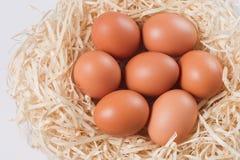 Imagem dos ovos no ninho Fotografia de Stock