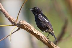Imagem dos pássaros empoleirados no ramo Animais selvagens Fotografia de Stock Royalty Free