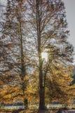 Imagem dos raios de sol que brilham através de duas árvores com as folhas amarelas e verdes com um lago no fundo foto de stock