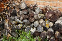 Imagem dos troncos de madeira cobertos de vegetação preparados para queimar-se foto de stock