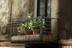 Imagem dos vasos de flores Fotos de Stock