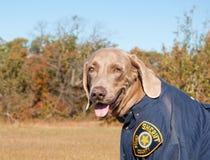 Imagem engraçada de um cão que desgasta um uniforme imagem de stock royalty free