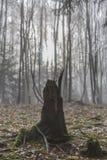 Imagem espetacular de um coto de uma árvore com suas raizes expostas com as folhas secas na terra nas frentes imagens de stock