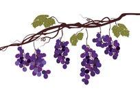 Imagem gráfica estilizado de uma videira com uvas Imagens de Stock