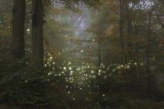 Imagem impressionante da paisagem do estilo da fantasia dos vaga-lume na noite tim foto de stock