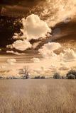 imagem infravermelha da câmera abra campos verdes Fotografia de Stock Royalty Free