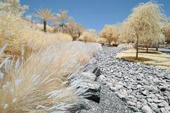 Imagem infravermelha das árvores e dos arbustos Foto de Stock Royalty Free