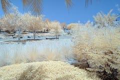 Imagem infravermelha das árvores e dos arbustos na cor falsa Foto de Stock Royalty Free
