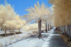 Imagem infravermelha das árvores e dos arbustos na cor falsa Imagem de Stock