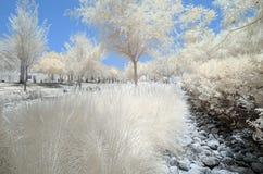 Imagem infravermelha das árvores e dos arbustos na cor falsa Imagens de Stock Royalty Free