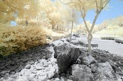 Imagem infravermelha das árvores e dos arbustos na cor falsa Fotografia de Stock