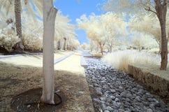 Imagem infravermelha das árvores e dos arbustos na cor falsa Foto de Stock