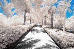 Imagem infravermelha das árvores e dos arbustos na cor falsa Fotos de Stock Royalty Free