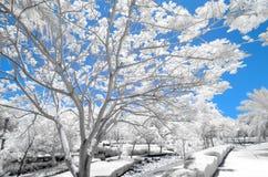 Imagem infravermelha das árvores e dos arbustos na cor falsa Imagens de Stock