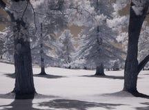 Imagem infravermelha delével, campo de golfe foto de stock