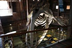 Imagem interior de um esqueleto da baleia Fotos de Stock