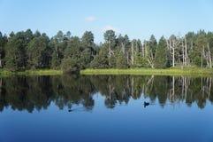 Imagem invertida em um lago Fotografia de Stock