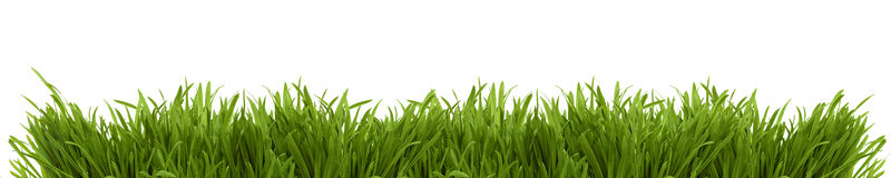 Imagem larga de uma grama fresca da mola Fotografia de Stock